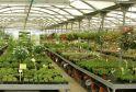 piante_verdi