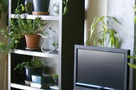 Ambiente il soggiorno - Piante da tenere in camera da letto ...