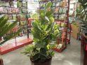 piante_serra